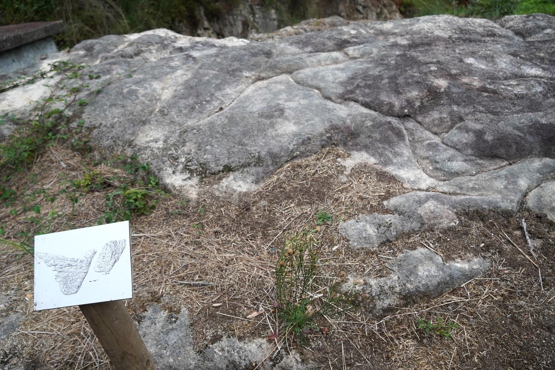 concello-de-tui-petroglifos-randufe (15)